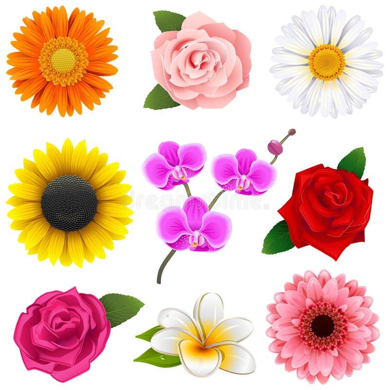 Iconos de la flor del vector ilustración del vector