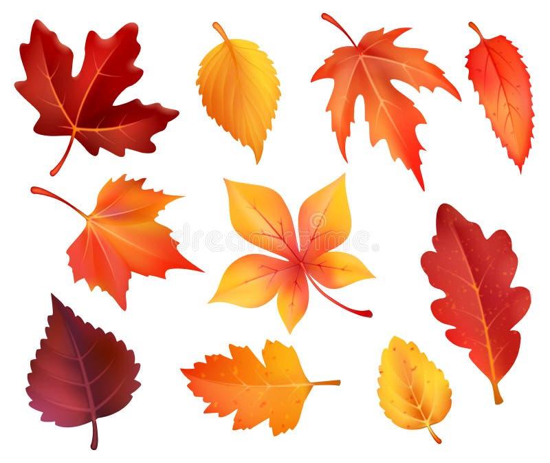 Iconos de la hoja del follaje del otoño de las hojas que caen del vector ilustración del vector