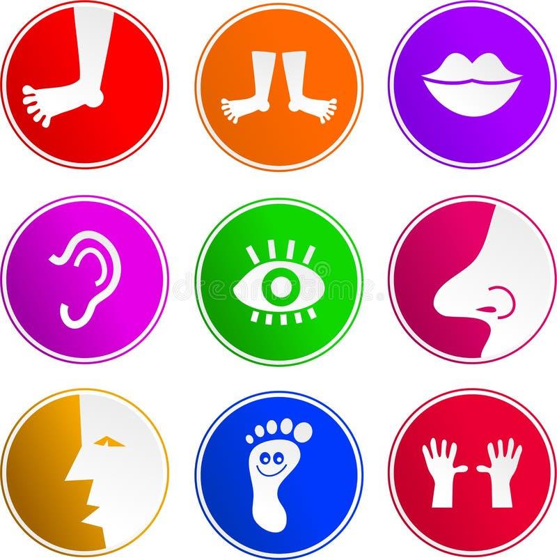 Iconos de la muestra de la anatomía stock de ilustración