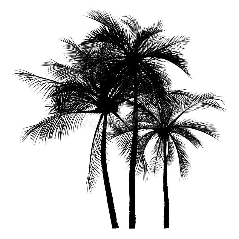 Iconos de la silueta de la palmera en el fondo blanco libre illustration