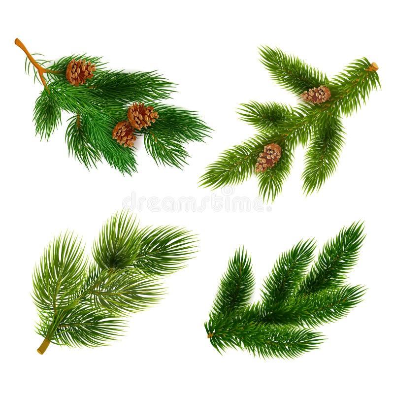 Iconos de las ramas de árboles del abeto y de pino fijados stock de ilustración