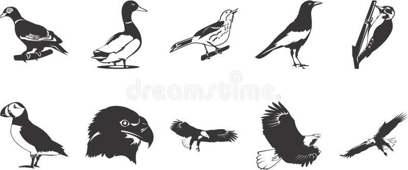 Iconos de los pájaros ilustración del vector