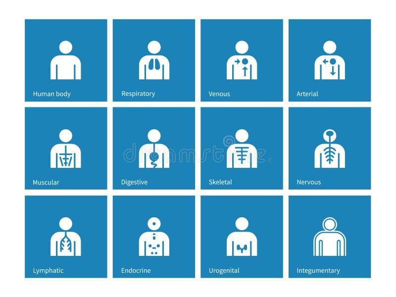 Iconos de los sistemas linfáticos, integumentary, urogenitales, endocrinos, respiratorios, nerviosos y digestivos de la anatomía  libre illustration