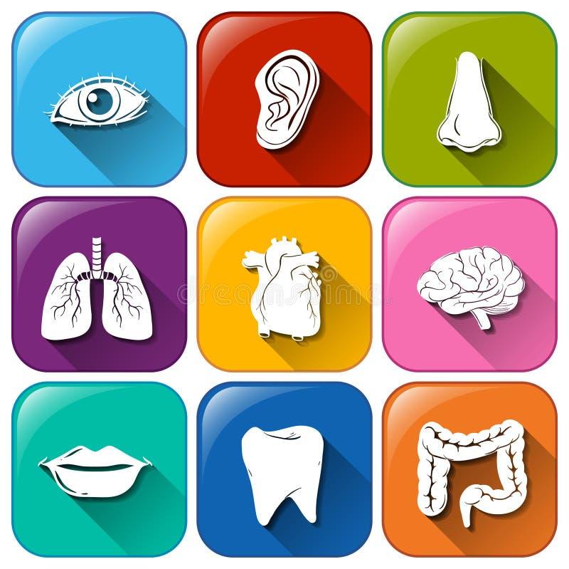 Iconos del órgano libre illustration