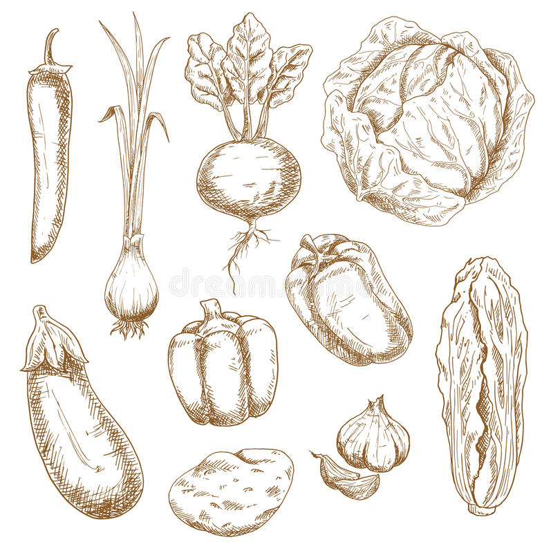 Iconos del bosquejo de las verduras de la granja y del jardín stock de ilustración