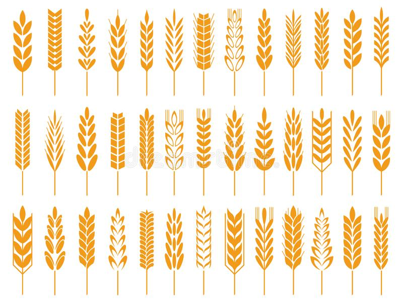 Iconos del grano del trigo Logotipo del pan del trigo, granos de la granja e icono aislado símbolo del vector del tallo del cente stock de ilustración