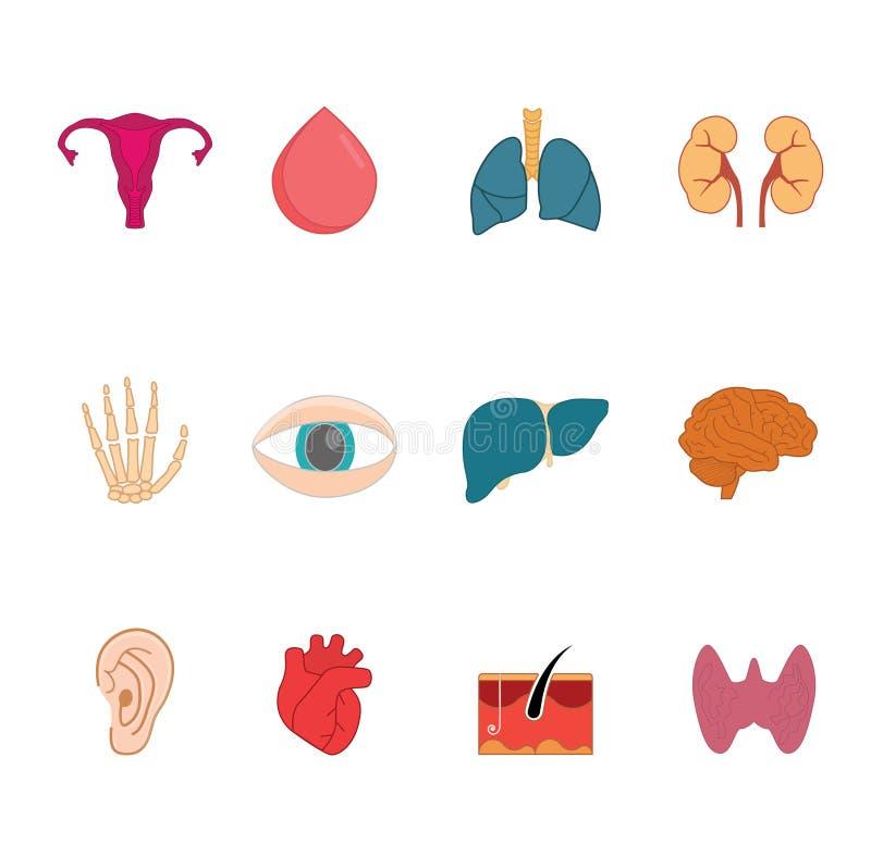 Iconos del vector del órgano humano Sistema limpio, moderno del icono de la anatomía libre illustration