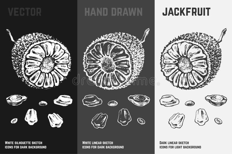 Iconos exhaustos del jackfruit de la mano Ilustraci?n del vector stock de ilustración
