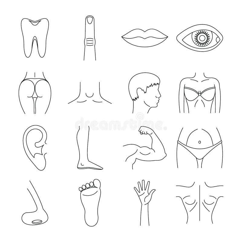 Iconos fijados, estilo de las partes del cuerpo del esquema ilustración del vector