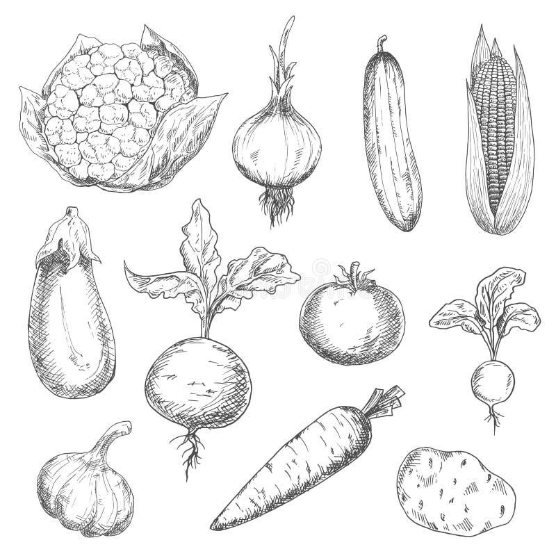 Iconos frescos y maduros del bosquejo de las verduras de la granja libre illustration