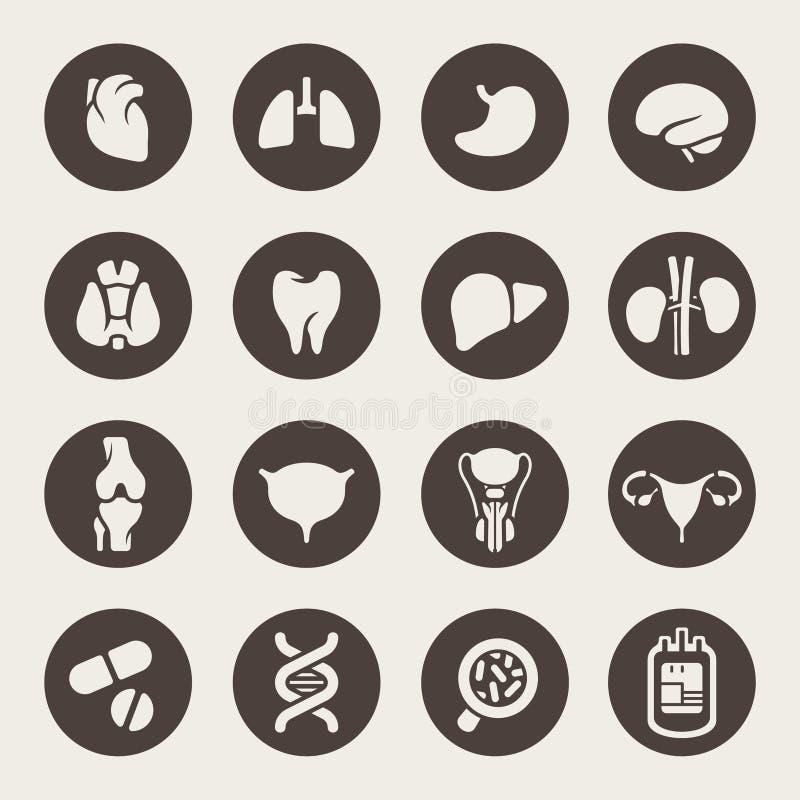 Iconos médicos. Órganos humanos stock de ilustración