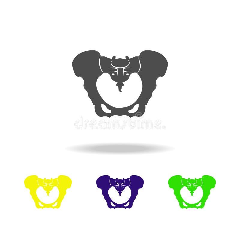 iconos multicolores del órgano del hueso de la cadera Elemento de los iconos multicolores de las partes del cuerpo Muestras e ico ilustración del vector