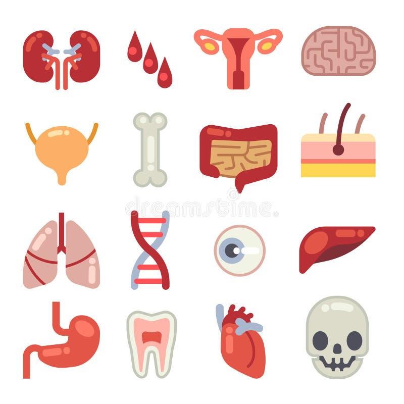 Iconos Planos Humanos Del Vector De Los órganos Internos Ilustración ...