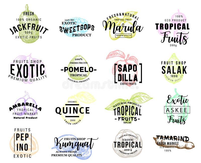 Iconos sabrosos exóticos del bosquejo del promo de las frutas tropicales libre illustration
