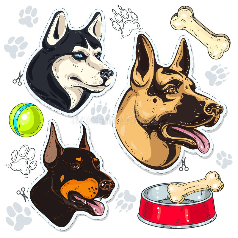 Icons colored dog, shepherd, husky, Doberman and a bowl of bone. Vector illustration, icons colored dog. Set guard dog breeds, dog head, shepherd, husky stock illustration
