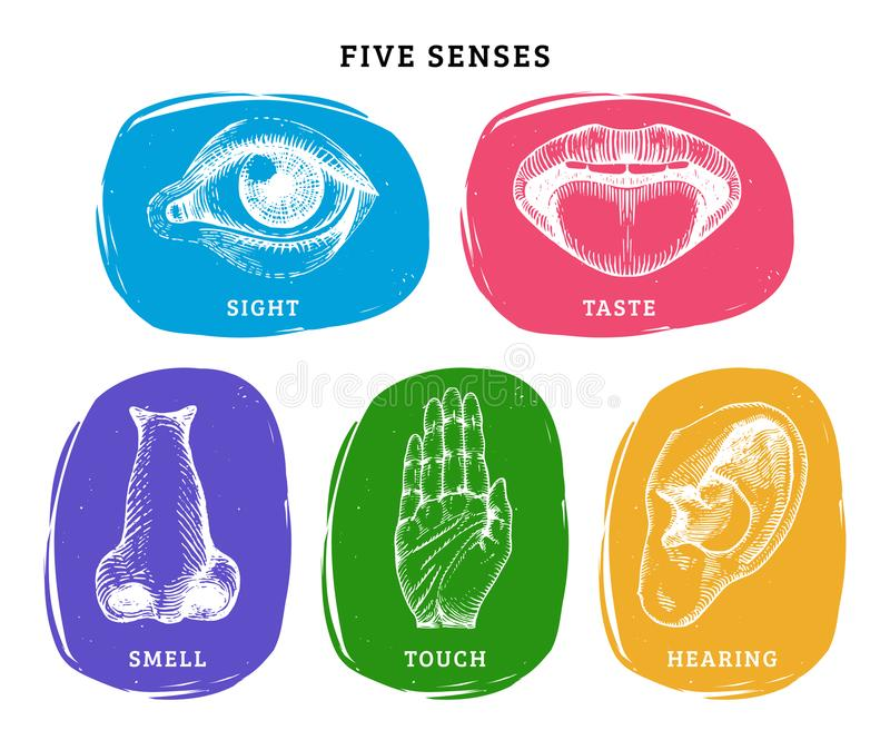 Icons set of five human senses in engraved style.Vector color illustration of sensory organs. vector illustration