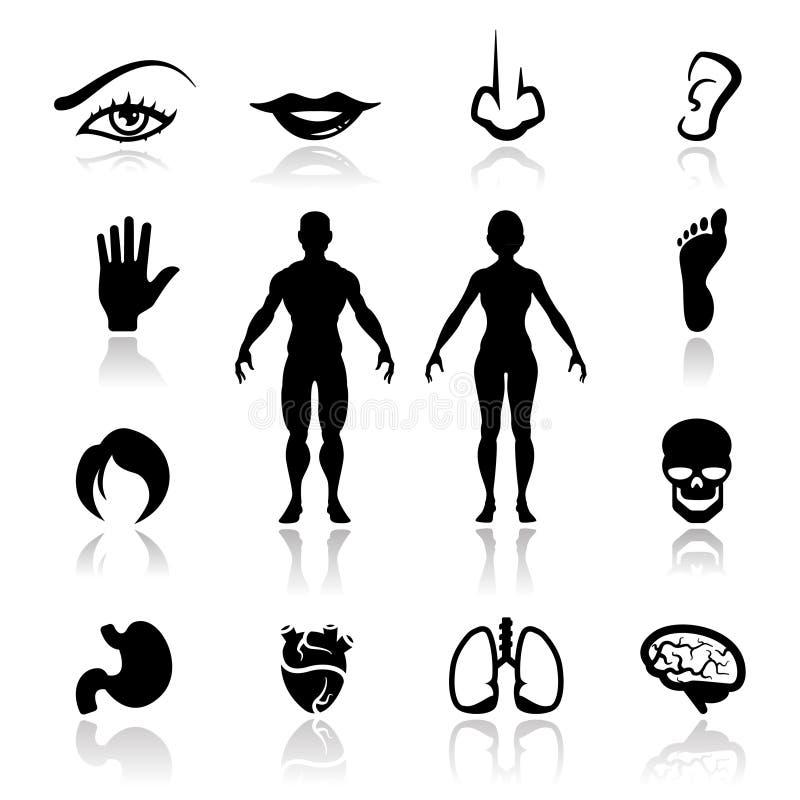Download Icons set human organs stock illustration. Image of black - 20691689