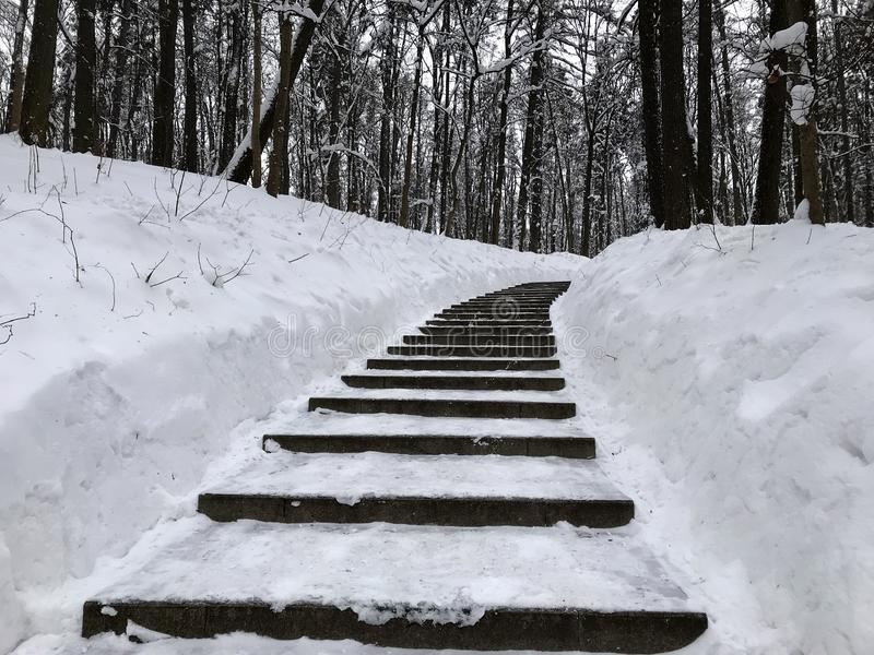 The icy staircase climbs to nowhere. Photo from mobile phone. Icy black steps among white drifts lead up to the black trees. Monochrome royalty free stock image