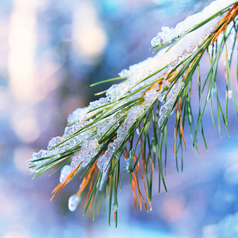 Free Icy Branch Stock Image - 35486341