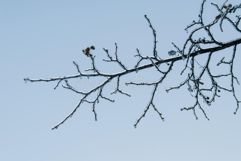 Icy branch royalty free stock photography