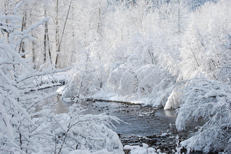 Icy Cold Stream. Rock Creek in the winter, icy cold, brush, aspens, alders, cottonwoods line the creek stock images