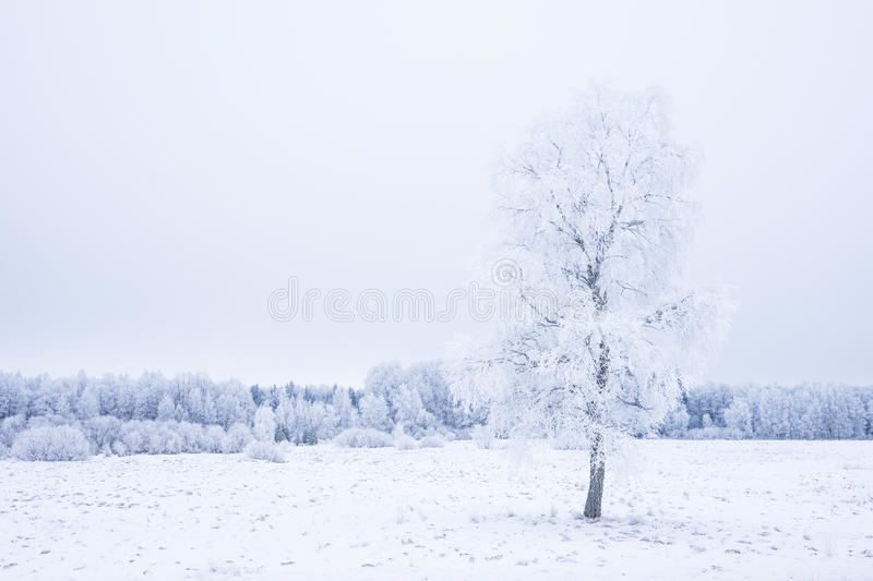 Icy cold winter in the forest. Frosty wood and ground. Freeze temperatures in nature. Snowy natural environment. Trees, snow and sky stock photos