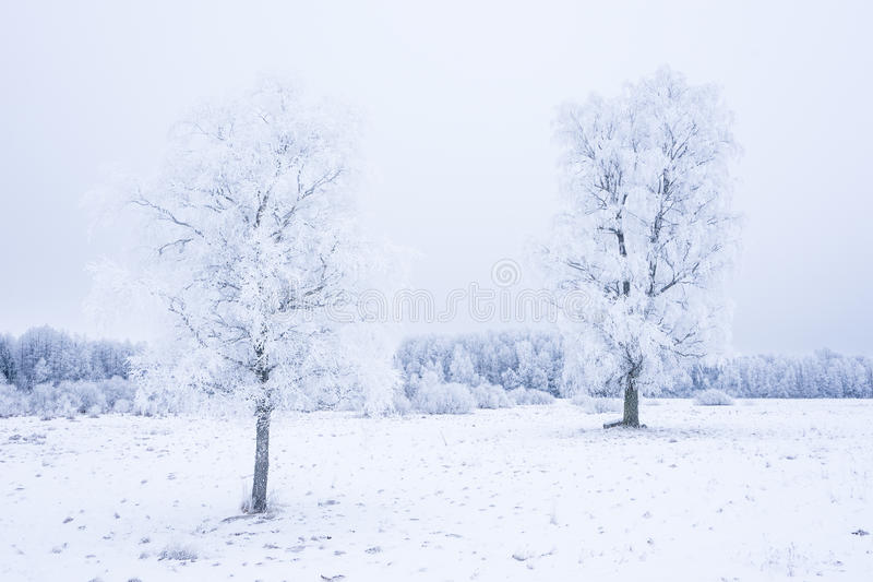 Icy cold winter in the forest. Frosty wood and ground. Freeze temperatures in nature. Snowy natural environment. Trees, snow and sky royalty free stock photos
