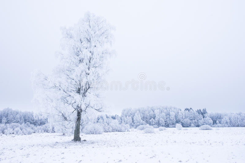 Icy cold winter in the forest. Frosty wood and ground. Freeze temperatures in nature. Snowy natural environment. Trees, snow and sky stock images