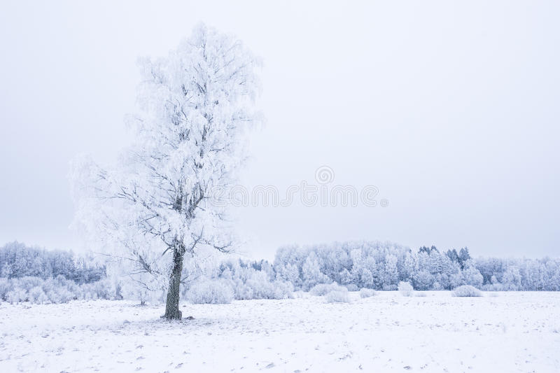 Icy cold winter in the forest. Frosty wood and ground. Freeze temperatures in nature. Snowy natural environment. Trees, snow and sky stock photo