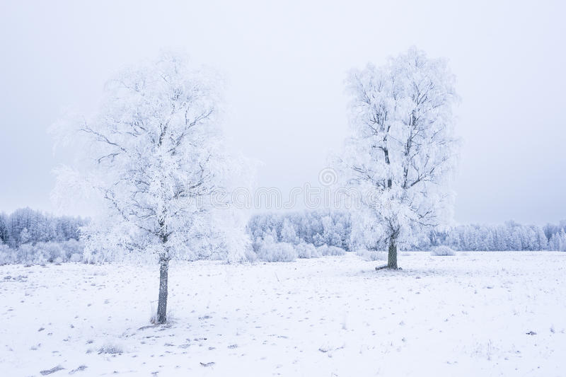 Icy cold winter in the forest. Frosty wood and ground. Freeze temperatures in nature. Snowy natural environment. Trees, snow and sky royalty free stock image