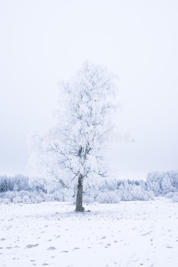 Icy cold winter in the forest. Frosty wood and ground. Freeze temperatures in nature. Snowy natural environment. Trees, snow and sky royalty free stock images