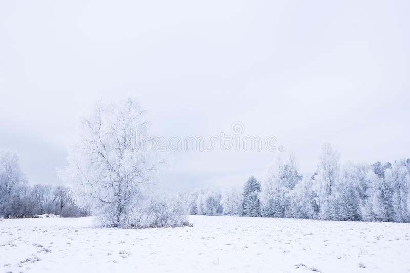 Icy cold winter in the forest. Frosty wood and ground. Freeze temperatures in nature. Snowy natural environment. Trees, snow and sky royalty free stock photo