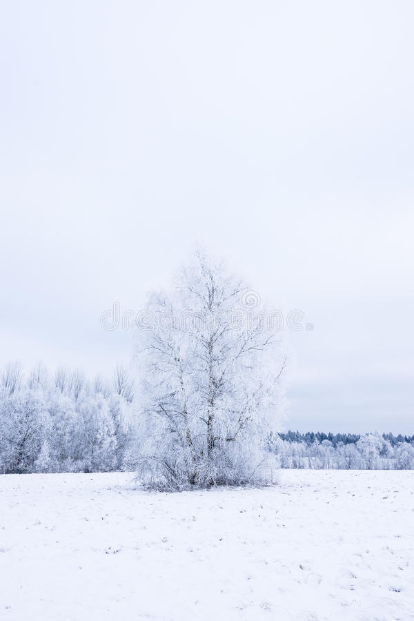 Icy cold winter in the forest. Frosty wood and ground. Freeze temperatures in nature. Snowy natural environment. Trees, snow and sky royalty free stock photography