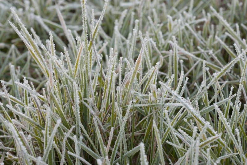 Icy gräs royaltyfri foto