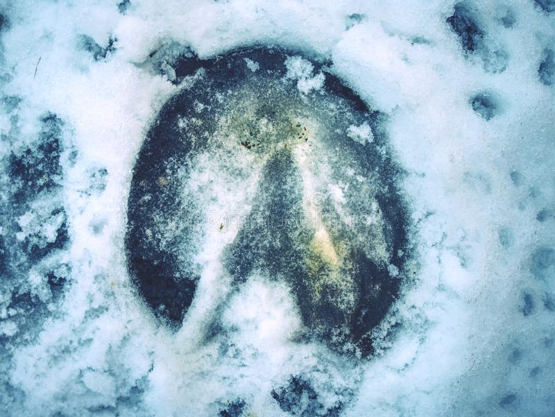 Icy horse footprint in snow, detailed piece stock image