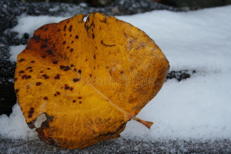 icy leaf arkivbild