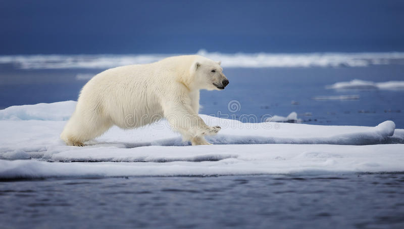 Icy Leap stock photography