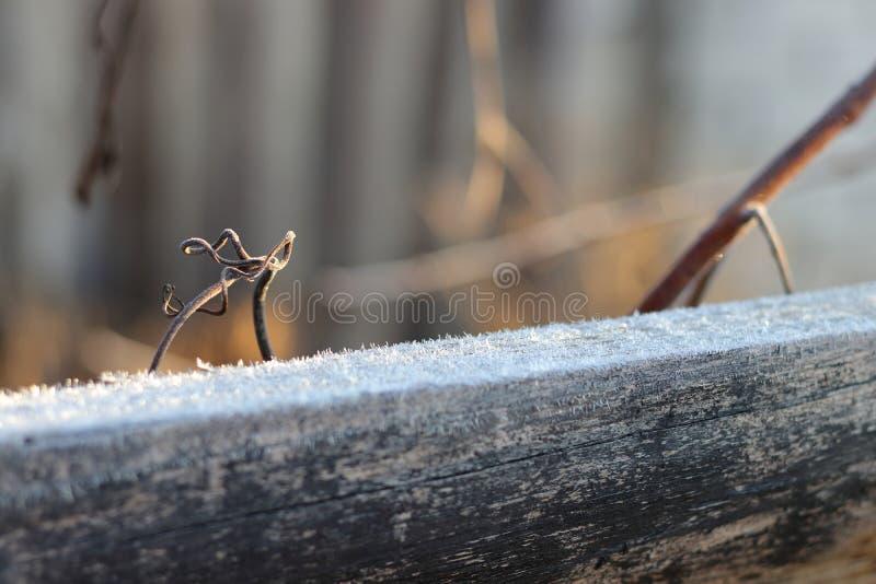 icy morgon royaltyfria foton