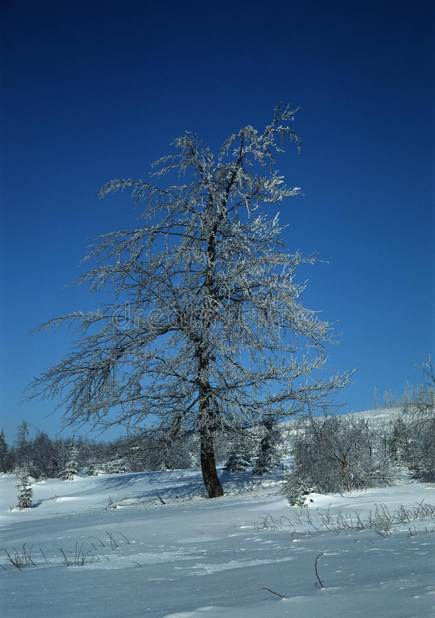 Download Icy tree stock photo. Image of snowy, mood, exterior - 17957708