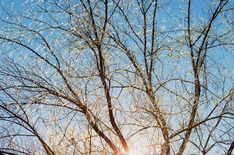 Icy tree branches against the blue sky and under the rays of the sun royalty free stock images