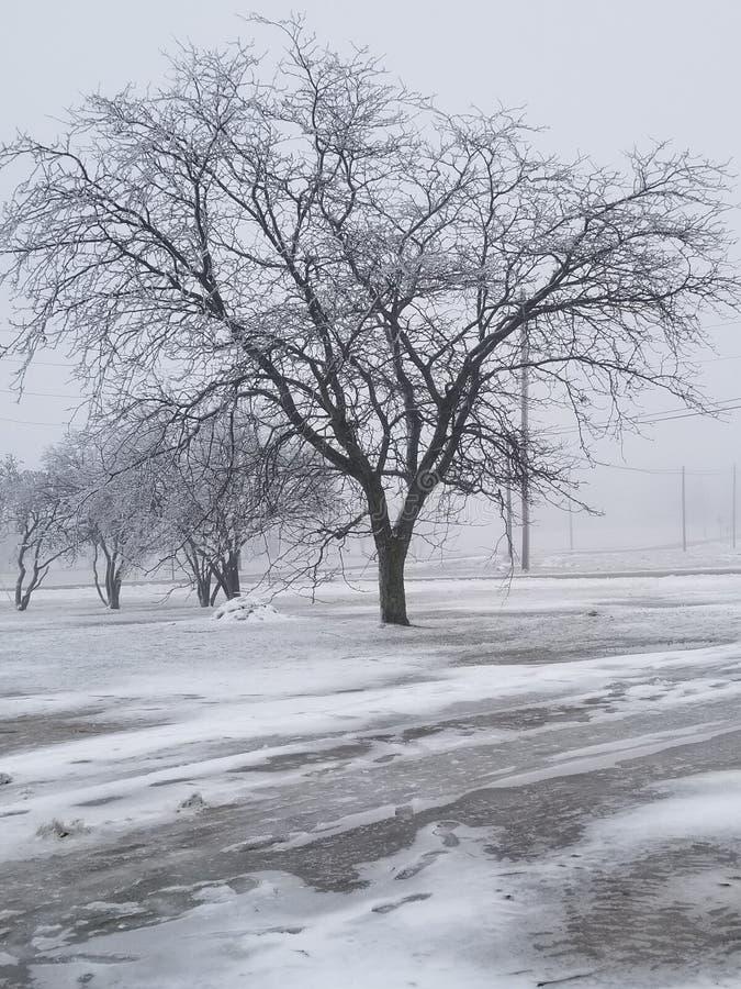 Icy tree stock photography