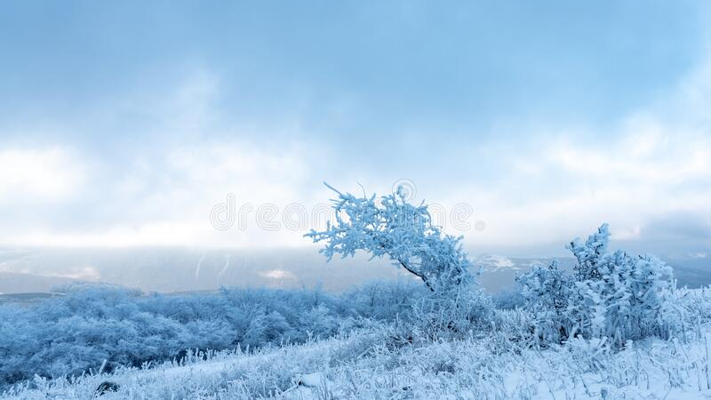 Icy tree in a snowy field. Landscape stock image