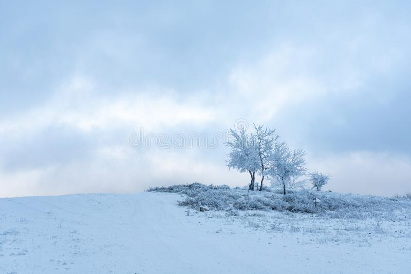Icy tree in a snowy field. Landscape stock images