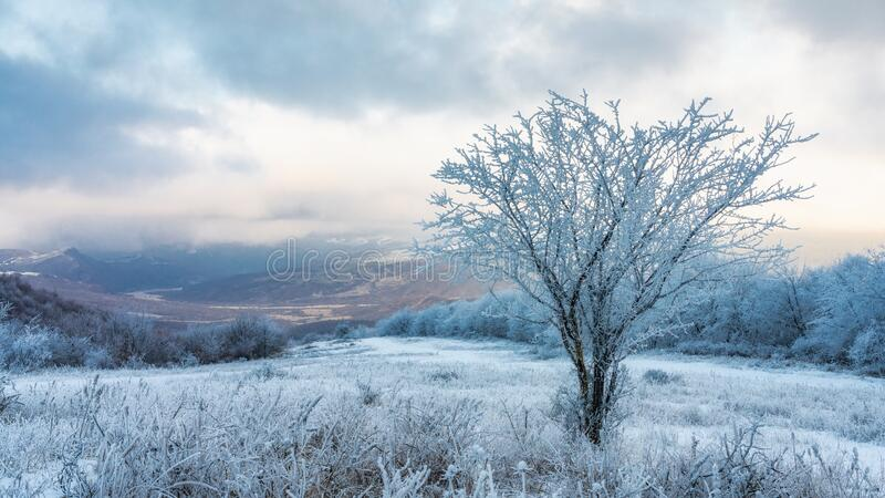 Icy tree in a snowy field. Landscape stock photography