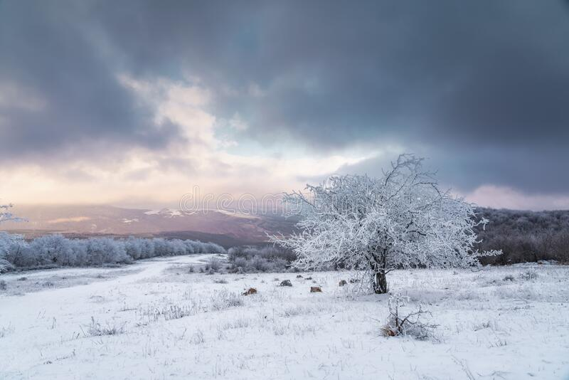 Icy tree in a snowy field. Landscape royalty free stock image
