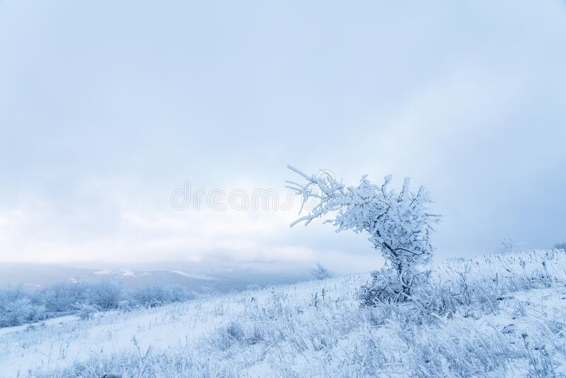 Icy tree in a snowy field. Scenery royalty free stock photo