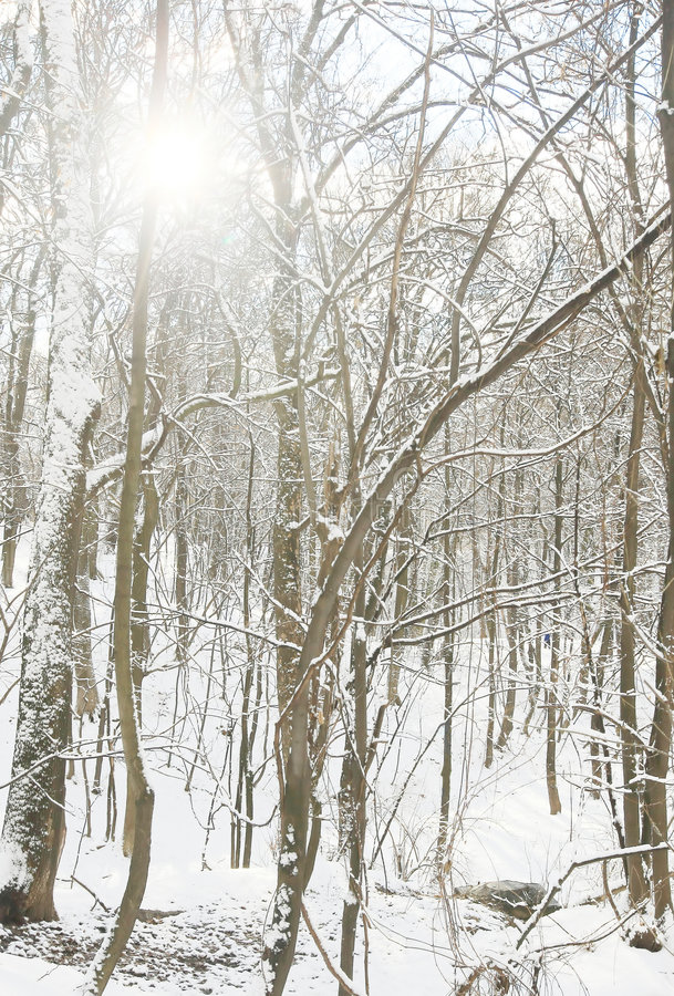 Download Icy Trees stock photo. Image of beauty, white, water, frozen - 6808680