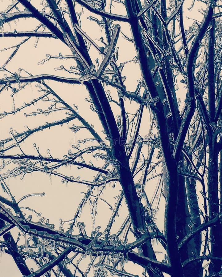 icy trees arkivfoton