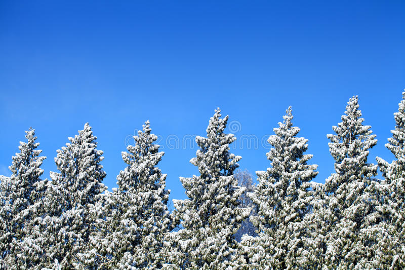 Download Icy Trees In A Row Royalty Free Stock Photos - Image: 34631318