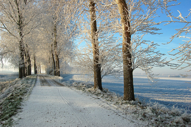 Icy trees on top of dutch stock photos
